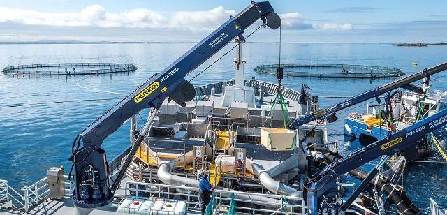 palfinger offshore crane