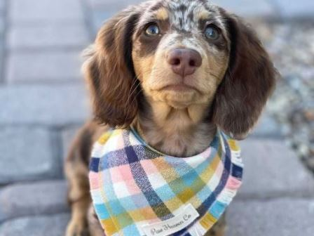 Cool Bandanas for Dogs